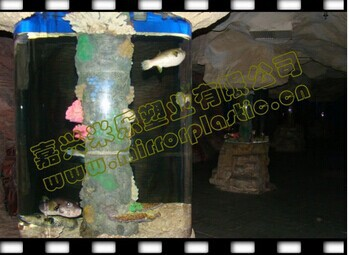 cylindrical glass aquariums
