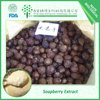 Personal care soapberry extract 70% Soapnut Saponin
