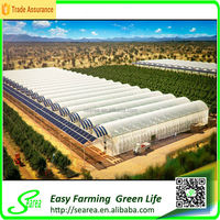 Hot sale tunnl greenhouse film for fruit