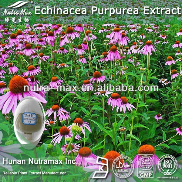 High Quality Powder Echinacea Angustifolia Extract (4:1 5:1 10:1 20:1)