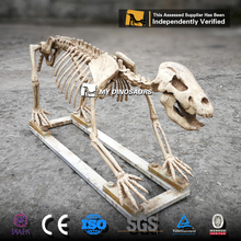 My-Dino N22-6 Artificial Resin Animal Skeleton For Sale