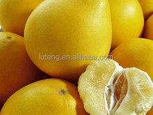 export fresh pomelo from China for honey pomelo importer