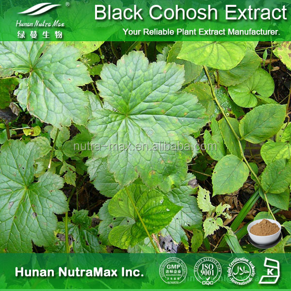 Natural Top Quality Herbal Ingredient Cimicifuga Racemosa Extract Black Cohosh Extract Powder