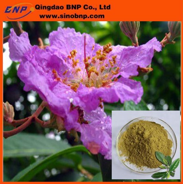 BNP Supply Corosolic acid extracted from Banaba Leaf,Banaba Leaf Extract