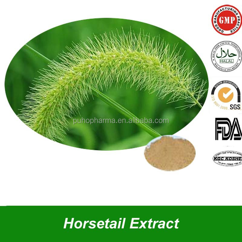 Natural Horsetail Extract Powder with Silica Acid Benefit for Diuresis Plant Horsetail Powder Extract