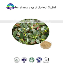 pharmaceutical grade raw materials Bacopa Monnieri Extract with top quality