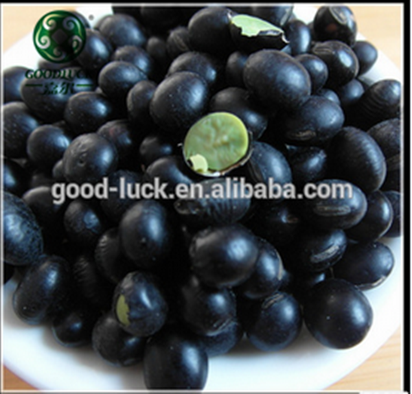 Scientific Name OF Black Matpe beans and Eye Beans Market Price