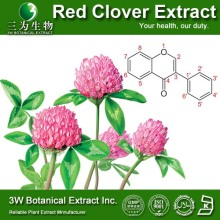 Red Clover Herb Extract/High Quality Red Clover Extract Biochanin A