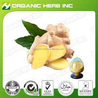 100% Pure ginger root extract powder(water soluble )