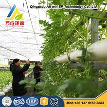 Hydroponics glass greenhouse for Agriculture