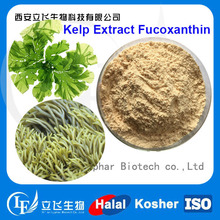 Factory Supply Fucoxanthin from Kelp Extract