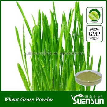 100% natural Wheat Grass Powder