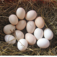 wholesale fresh yellow sale yolks whites organic chicken eggs price in bulk egg making bulk for sale