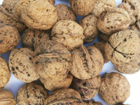 Farmers directly sell walnut with good taste and nutritional value