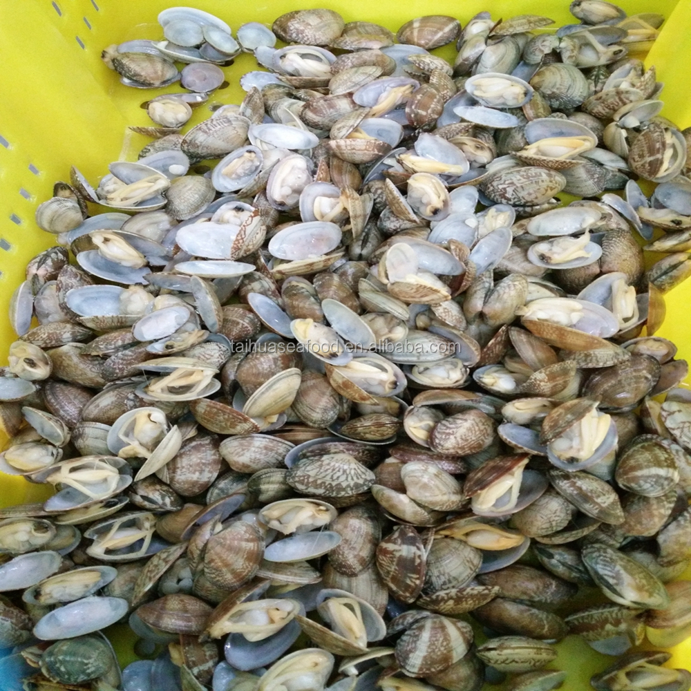 Nice Quality Short Necked Clam