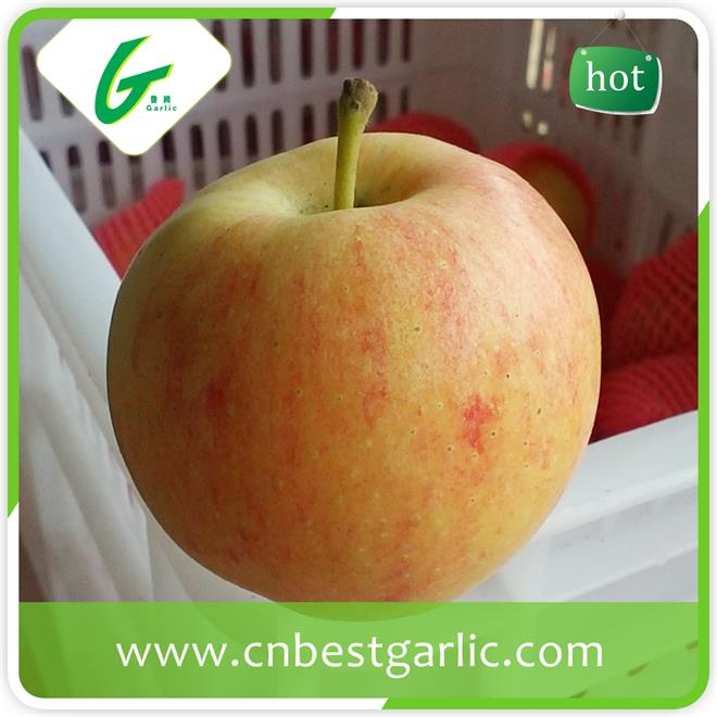 New crop fresh red royal gala apple