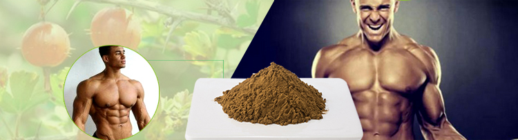 Hot selling in EU market saw palmetto powder extract