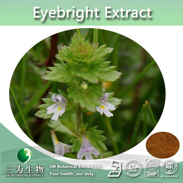 Top Quality Food Grade Eyebright Extract 4:1 10:1 20:1