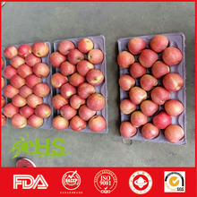 Top quality fresh red fuji apple Chinese suppliers