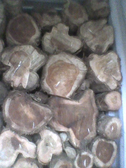 rose wood and teak logs