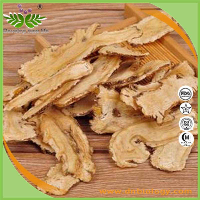 High quality angelica extract 4:1 for health supplement