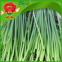fresh garlic sprouts manufacturer in China