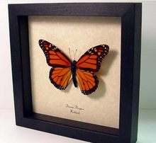 Do the old pure wood frame thick stereo butterfly flower insect white wood stereo photo frame