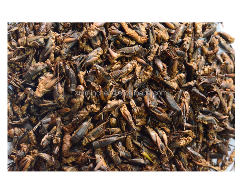 Pet Product of Freeze Dried Cricket
