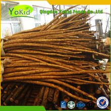 Chinese Yokid Golden Fresh Burdock Root For Export