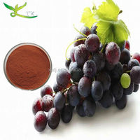 GPM Standard 95% proanthocyanidin/ Grape seed extract of best quality