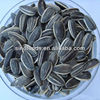 Large Black sunflower seeds