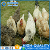 /product-detail/brand-new-pvc-coated-bird-animal-cages-hexagonal-chicke-wire-mesh-60610426690.html