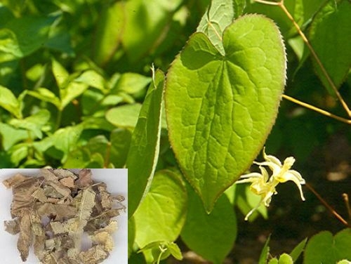 100% Natural 10% 20% 40% 50% Epimedium P.E. Icariin