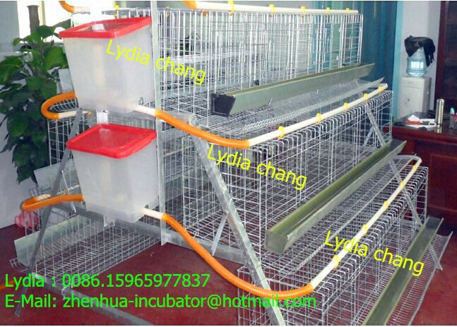 Layer Egg Chicken Cage//Poultry Farm House Design (lydia : 008615965977837)