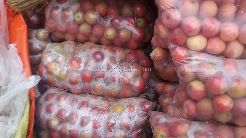 Hot selling new brand china apple fruit fresh red delicious qinguan apple fuji apple