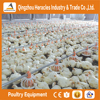 Factory price poultry farm equipment for brolier and breeders