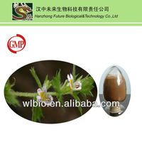 100% Natural Eyebright Extract from GMP manufacture