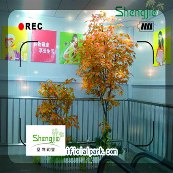 yellow evergreen trees,tropical tree for indoor
