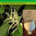 2016 China Giant Knotweed root extract powder, Resveratrol 10%~98%
