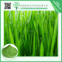 100% Natural certified wheatgrass powder/wheatgrass extract 5:1