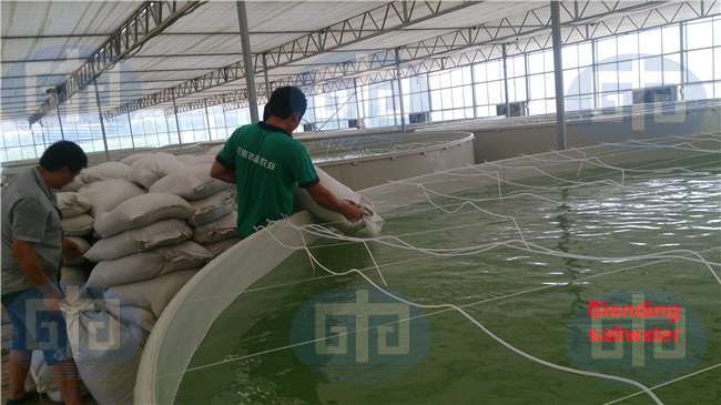 Commercial Indoor Shrimp Farming Ras Buy Shrimp Farming