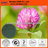 Buy Natural Red Clover Extract Powder