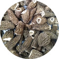 dried morchella esculenta cultivate