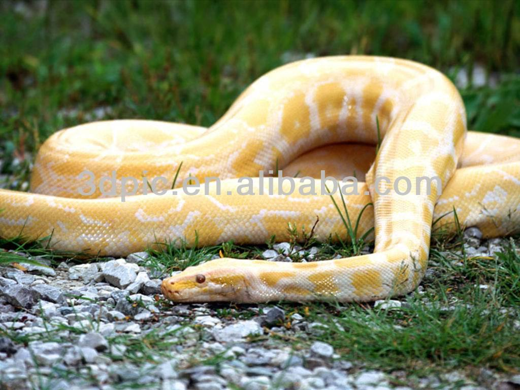 Dangerous animal wildlife python 3d images