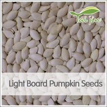 brand new type edible kernel raw pumpkin seeds