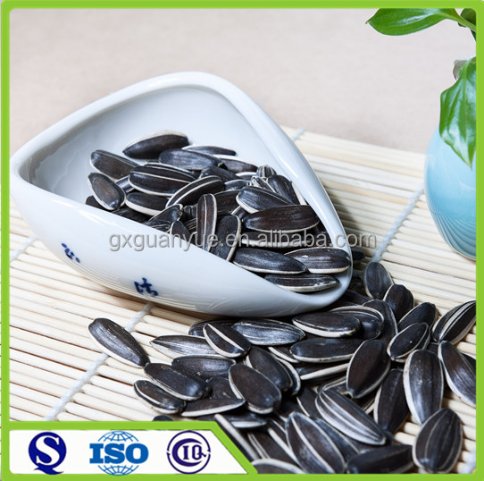 Wholesale seeds of sunflower type 5009