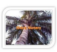 Cocos Nucifera Coconut Palm Trees Reliable Growers