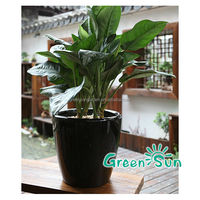 home decor low price large outdoor plant made for plastic