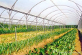 Agricultural Greenhouse Covering Film
