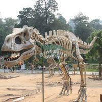 Skeleton Replica for Cartoon Animal Model Buyers